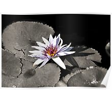 Water Lily ~ I Stand Here Alone and Yet Strong Poster