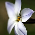 Side View of a star by Hege Nolan