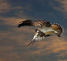 Letting Go of the Nest by byronbackyard
