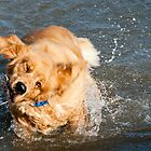 Shake Dog Shake by James  Birkbeck Animals