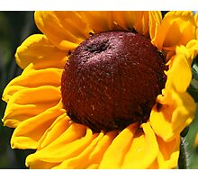 Warped Black Eyed Susan Photographic Print