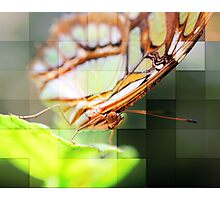 Enchanted Butterfly Photographic Print