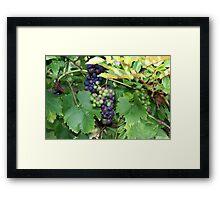 The Grape Vine Framed Print