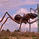 Giant Ant by Chris Thaxter