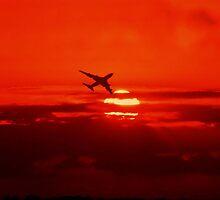 Sunset flight  by larry flewers