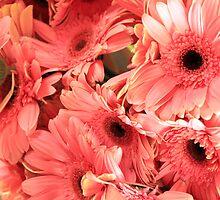 Pink Daisy's by Renee D. Miranda