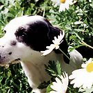 Annie Among Daisies by mjds