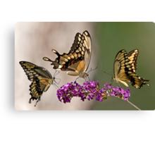Swallowtail Symphony Canvas Print