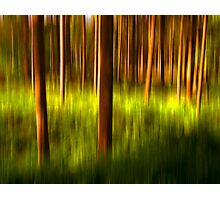 Trees in colors Photographic Print
