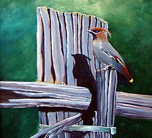 Bohemian Waxwing  by Cal Kimola Brown