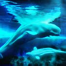 Belugas from the Arctic by Rhonda Strickland