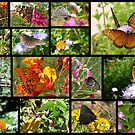 Butterflies in Arizona ~ Poster by Kimberly P-Chadwick