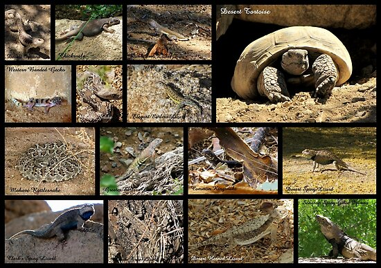 Commonly Seen Arizona Reptiles ~ Poster by Kimberly Chadwick