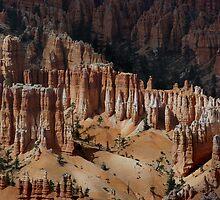 Among the Hoodoos ~ Bryce Canyon, Utah USA by Vicki Pelham