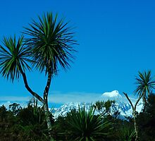 """""""tree tops - mountain tops""""  gillespies beach, nz by rina  thompson"""