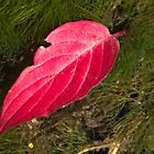 Ruby Red Leaf and Mossy Green Moss by Mitchell Tillison