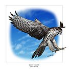 SAKER FALCON Falco cherrug (NOT A PHOTOGRAPH OR PHOTOMANIPULATION) by DilettantO
