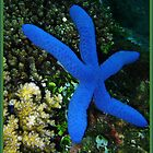 My Blue Starfish by Denise J. Johnson