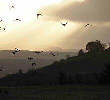 Evening Flight - Derry Ireland  by mikequigley