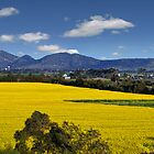 Canola Fields -  Lara, Geelong  by peterperfect