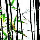 Bamboo by Malcolm Clark