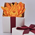 Flower gift by InfotronTof