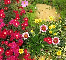 Gazanias and pig face beside the stepping stones. by Marilyn Baldey
