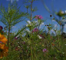 Flower Field by marens