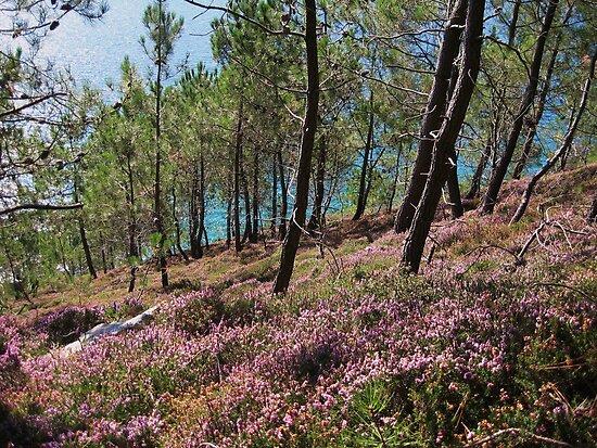 Pinède de Trez Bihan by marens