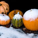 Six Pumpkins Surprised... by steppeland