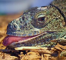 Iguana Sticking out his Tongue by Paulette1021
