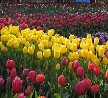 Floriade - Canberra by GeorgeOne