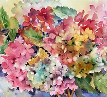 Hydrangeas by Ann Mortimer