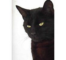 Panther Inside - Burmese Cat Photographic Print