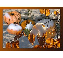 Pumkins in the snow Photographic Print