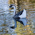 Goose on golden water by inkedsandra
