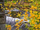 Looking through the Yellow ~ Montmorency River by Lucinda Walter