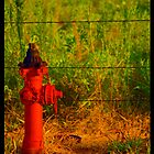 Country Hydrant - Wichita Falls, Texas by buttonphoto