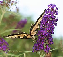 Butterfly Butt by Terry Aldhizer