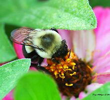 Cute Eyed Bumble Bee On Flower by Terry Aldhizer