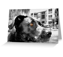 maya b&w Greeting Card