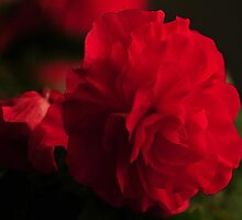 BRILLIANT RED by RoseMarie747