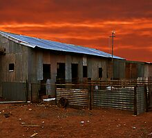 Shearing Shed by Julia Harwood