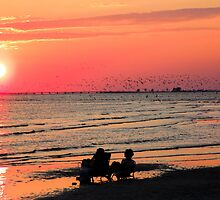 Hundreds of Birds Sunset  109 Views by Rosalie Scanlon