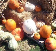 Harvest Haul by Dan McKenzie