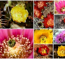 Cactus Flowers - Collage Series by Angela Pritchard
