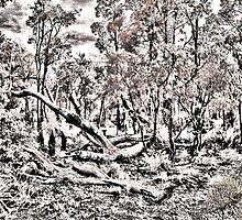 Bushland in Bungendore Park, WA by BigAndRed