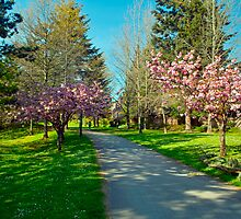 The Prunus Path, Vancouver, BC by Priscilla Turner