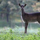 Fallow deer - 8840 by DutchLumix