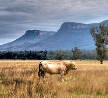 Strength  - Capertee Magic - Capertee Valley, NSW , Australia - The HDR Experience by Philip Johnson